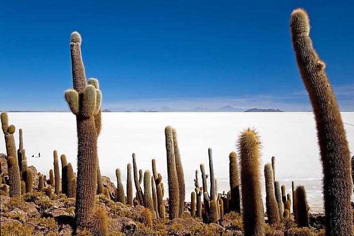 101_080521_120_Bolivia_Reserve_Eduardo_Avaroa_Incahuasi