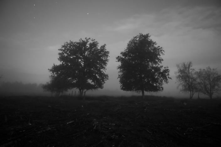 Bomen Bargerveen