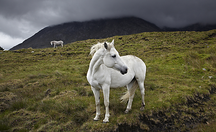Connemara ponies_Nat Geo Traveler