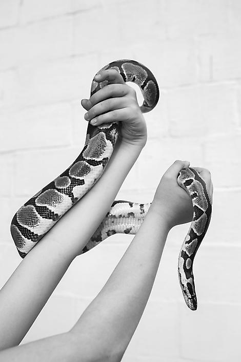 Dobby the Python
