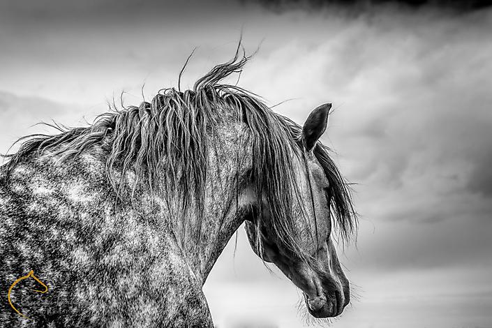 Ernesta Verburg Photography 2016-45