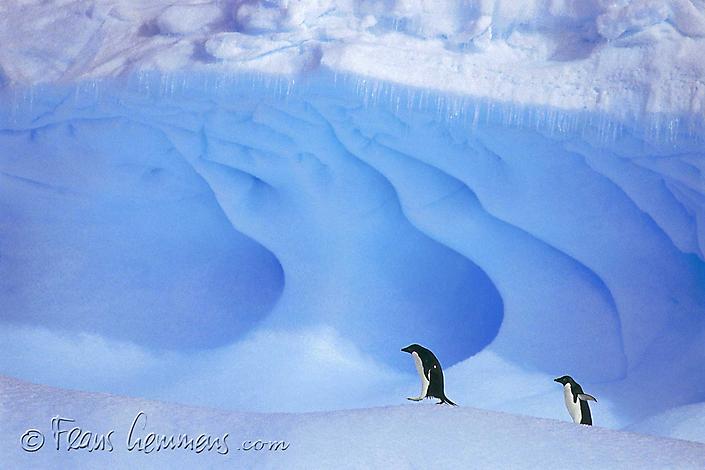 flp-antarctica-1013