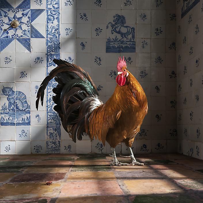 Goud Fries | autonoom fotokunst