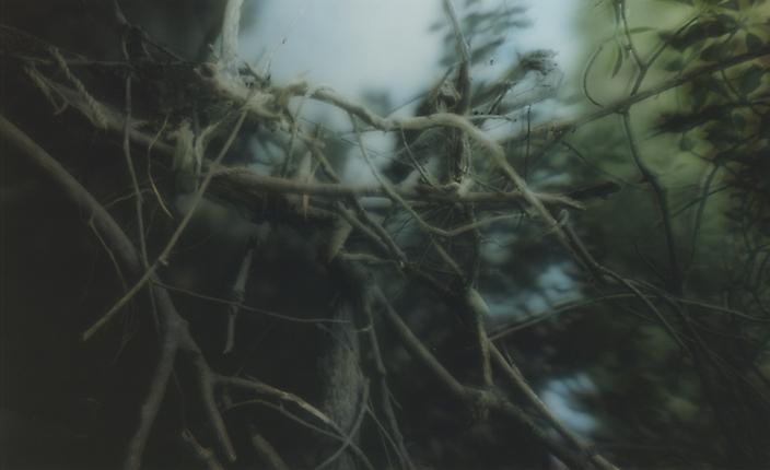 jap-iriomangrove