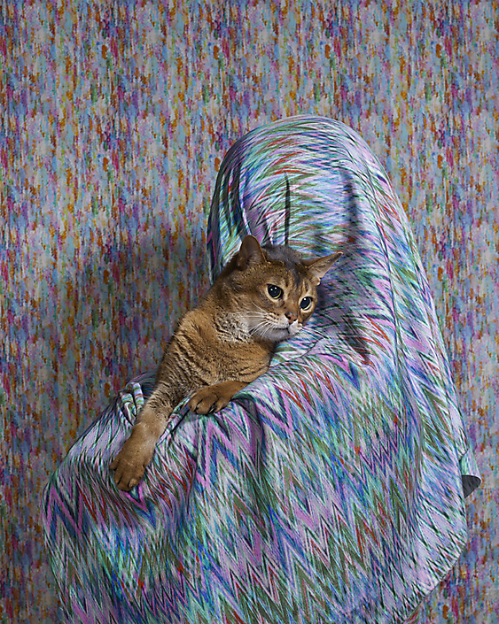 Volkskrant Magazine - Cats