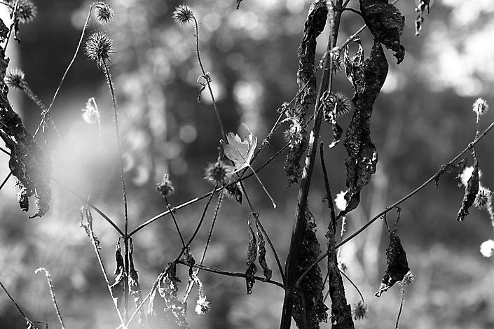 LR_Foto Elske Riemersma_MG_9712
