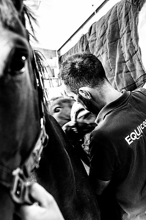 Dr. Patrick Brogan -dierenarts en specialist in voortplanting bij paarden