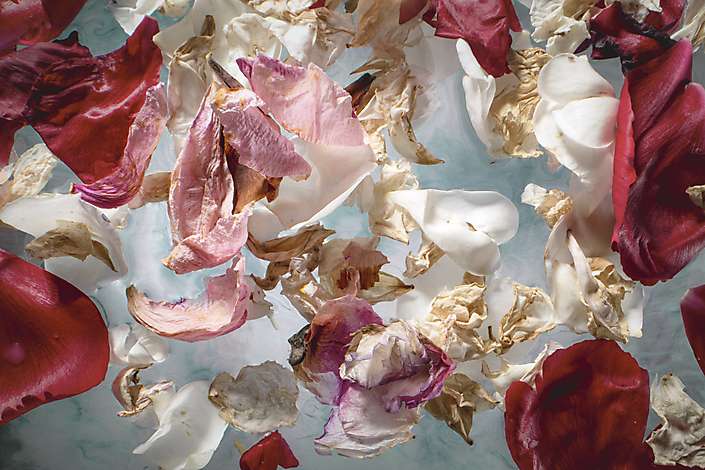 Fugacious Flowers II