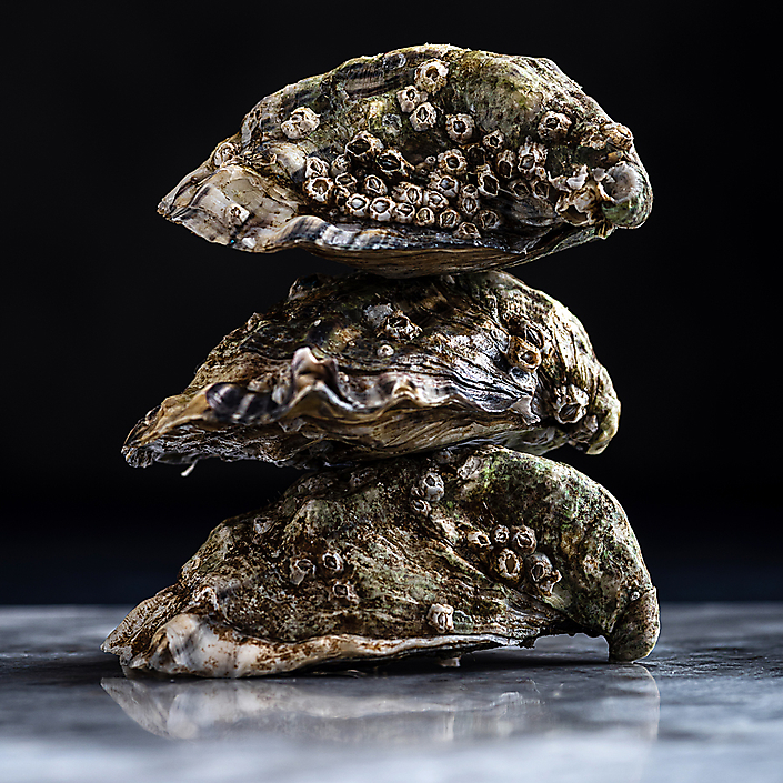 oesters-dp