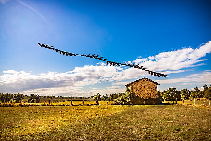 Oiseaux-Les-Combes fine-art photography