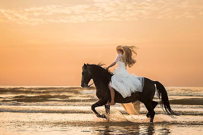 paard-