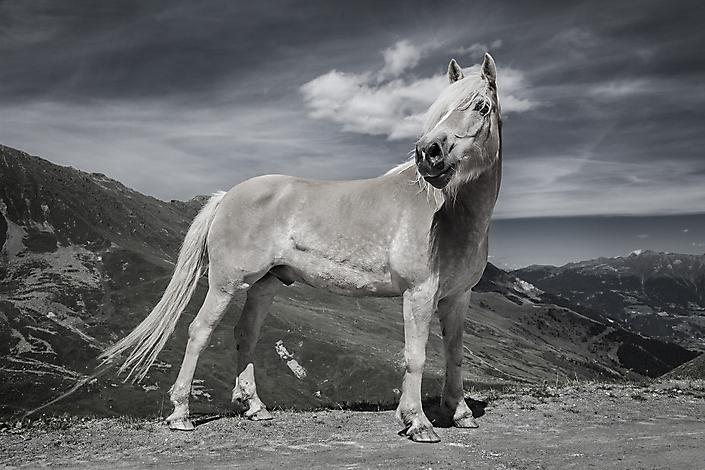 Paard bergen oostenrijk
