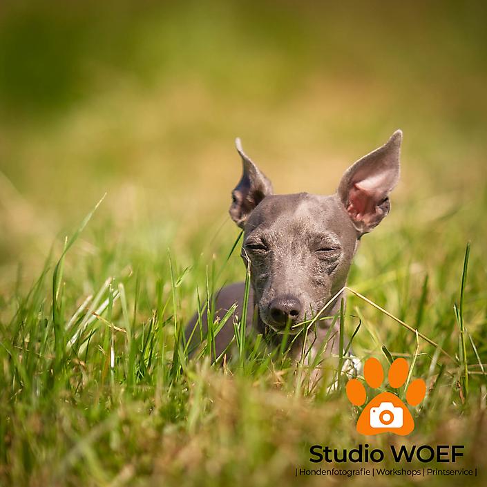Studio_WOEF_Blue-2