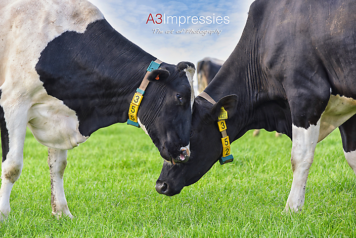 Agrarische fotografie